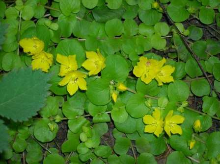 растения для пруда фото и названия